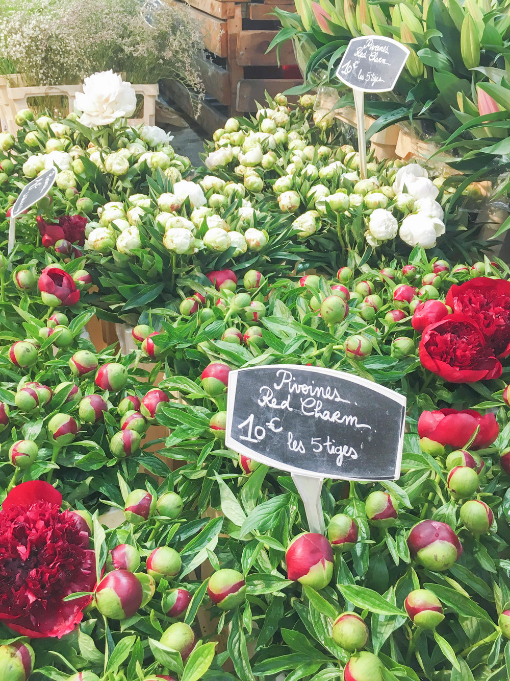 Peonies at Marche des Enfants Rouges in Paris