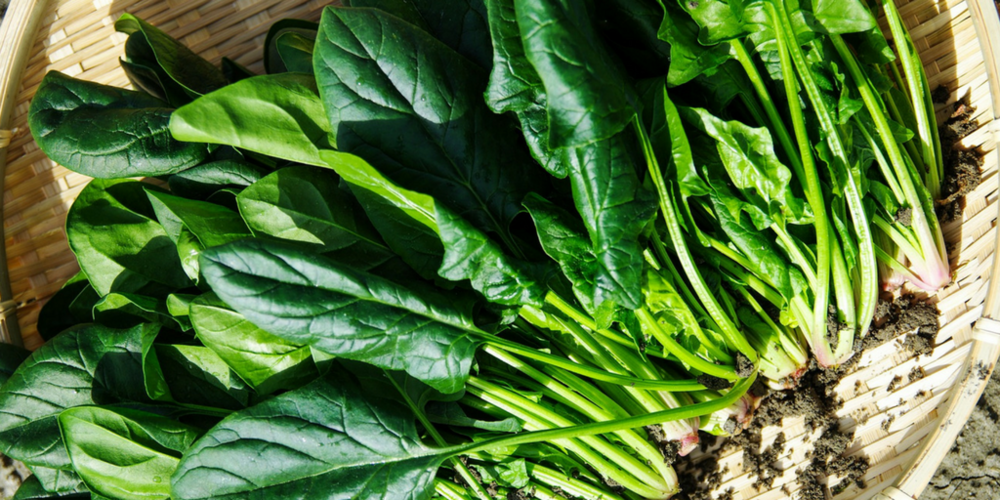 organic spinach - Spinach is densely packed with vitamins, minerals and fatty acids that are all essential for healthy hair growth and repair. Vitamins A, B, and C strenghthen and protect while omega-3, magnesium and powerful antioxidants preserve hair health.