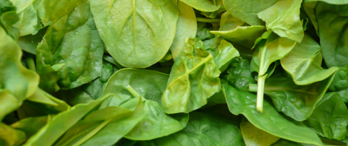 Why spinach? The benefits for hair & skin -