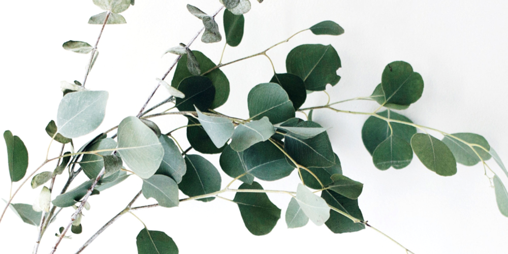 eucaplyptus essential oil - Eucalytus essential oil releases a soothing aroma to tame the mind while relaxing tired muscles and feet. Its natural anti-inflammatory and antibacterial properties help reduce swelling and ward away bacteria and toxins.