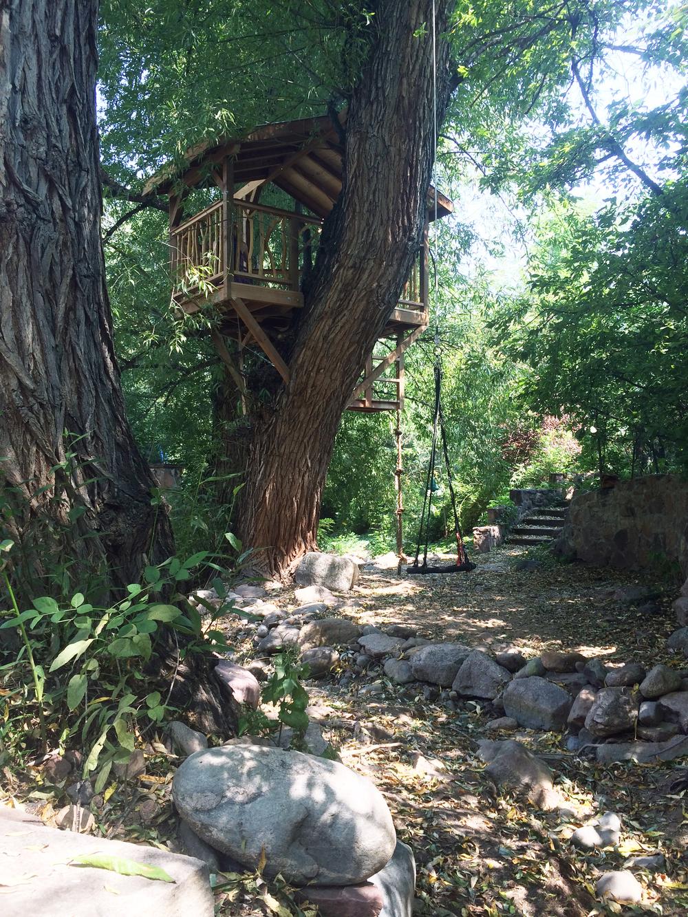 Willow 6.jpg