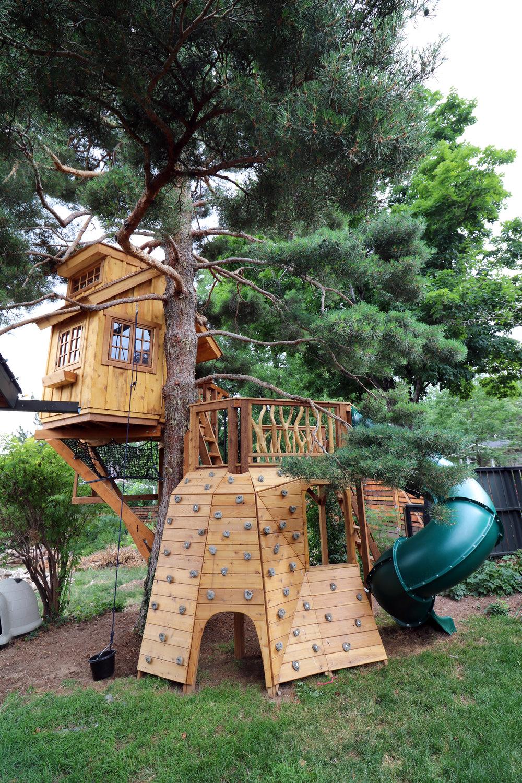 Scots Pine 3.JPG