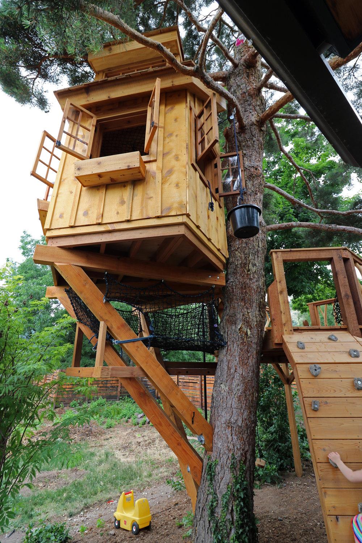 Scots Pine 24.JPG
