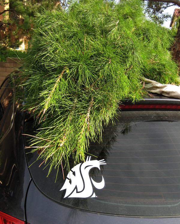 WSU sticker with Christmas Tree
