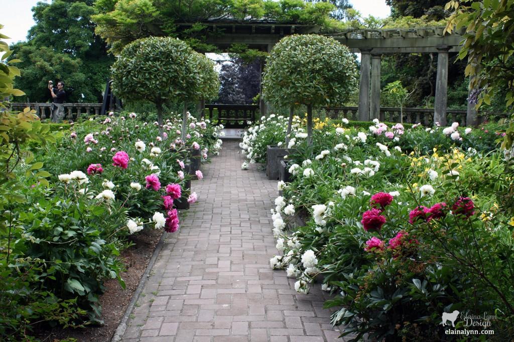 Peony garden at Hatley Castle in Victoria B.C.