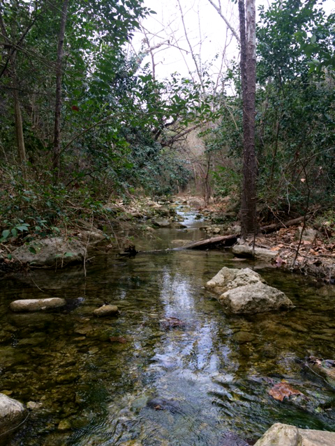I love listening to the sounds of a rippling creek. If it hadn't been so chilly outside, I probably would have jumped in!