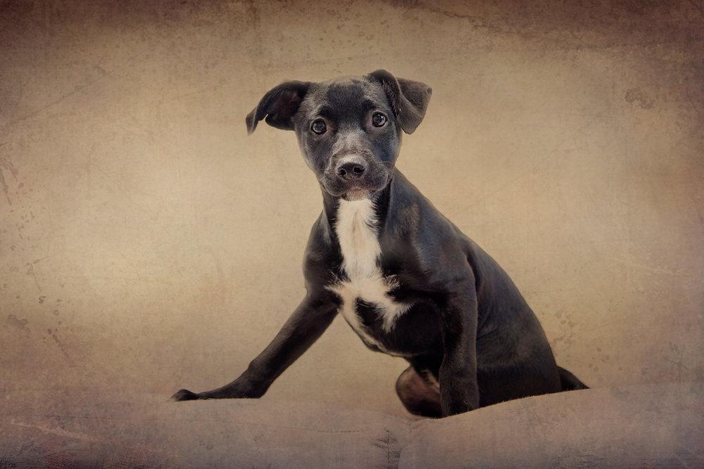 textured-puppy.jpg