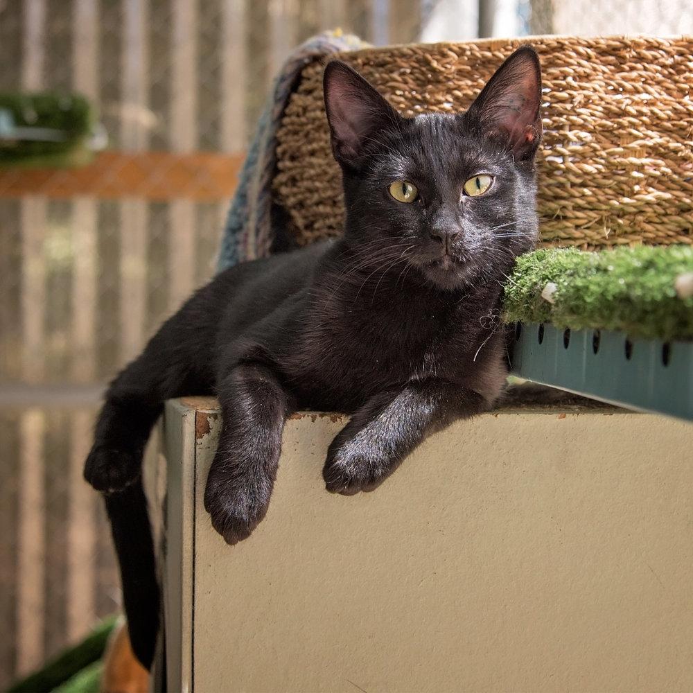 Black kitten 2 for web.jpg
