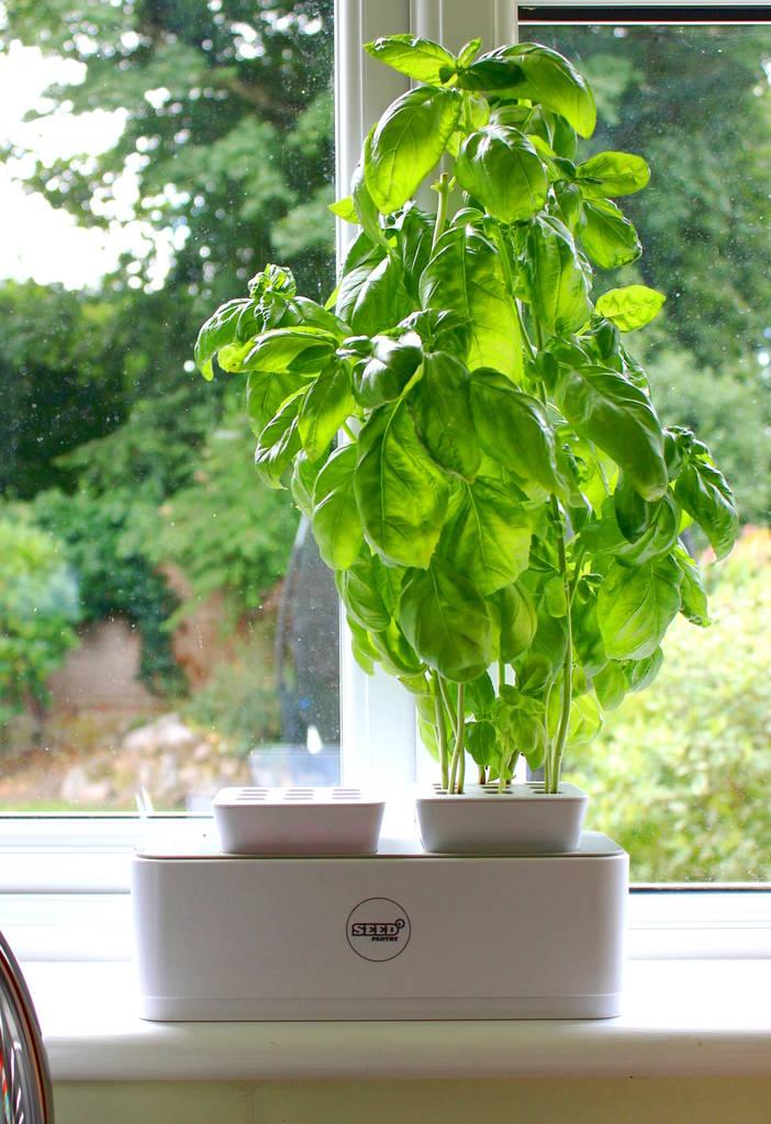 original_seed-pantry-grow-pod.jpg