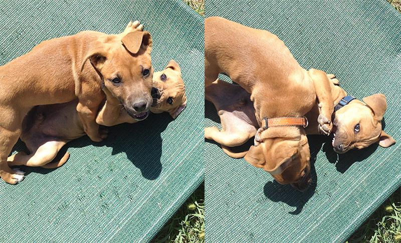 garden-prep-puppies2
