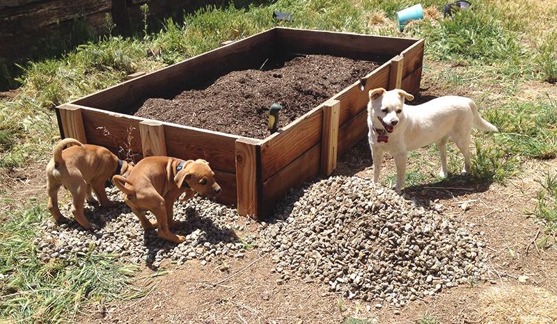 garden-prep-pups