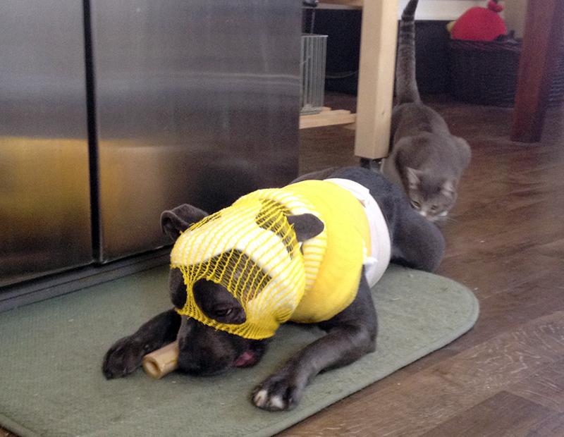 agnes-bone-kitty