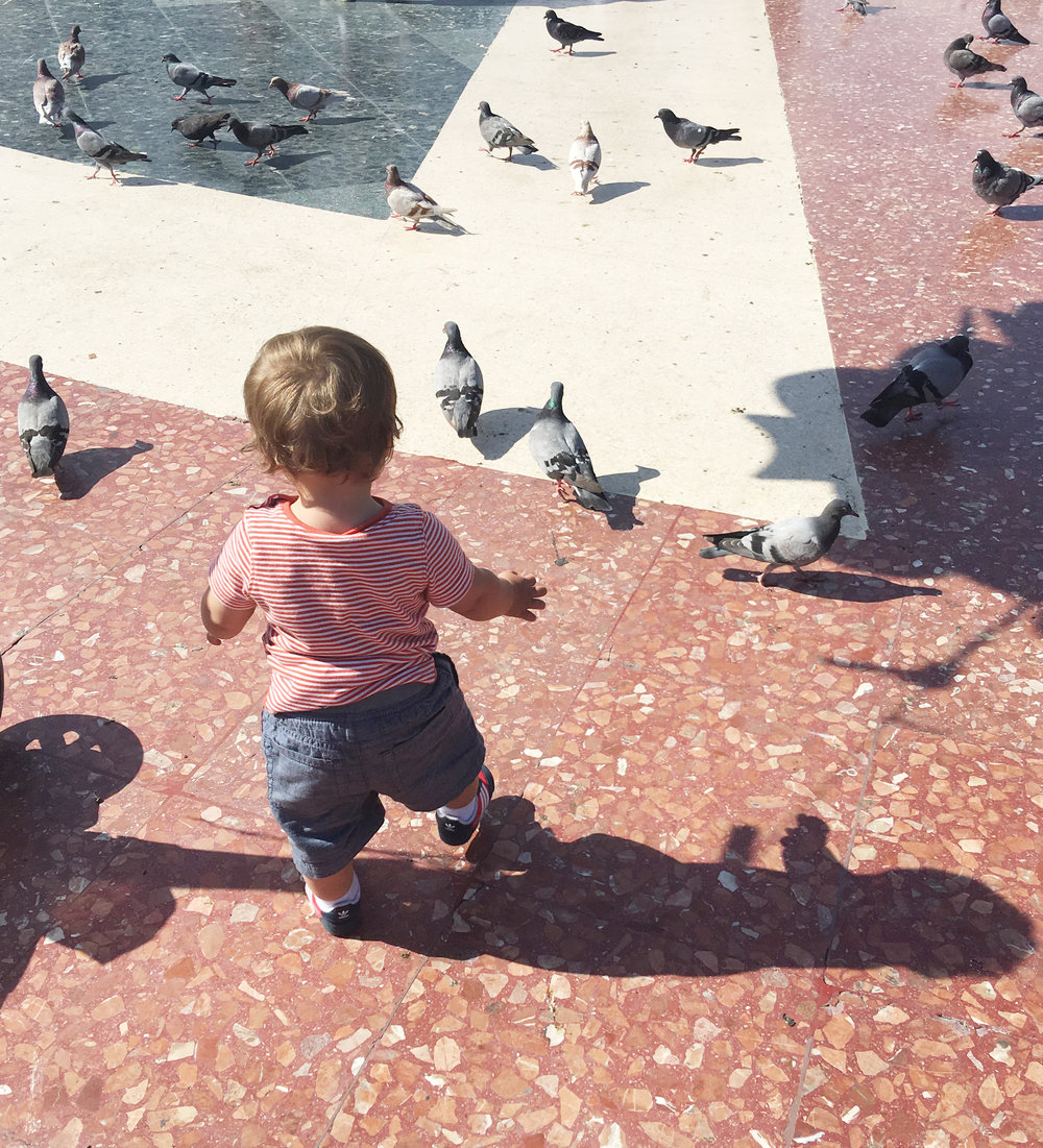 International-Trvel-Toddler-Play-Pigeons