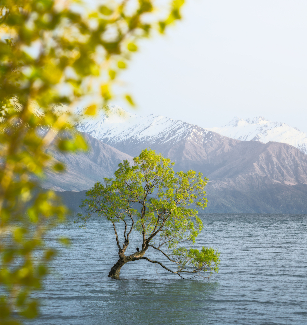 Wanaka-Tree-Sunrise-Mitch-Green-Photos.jpg
