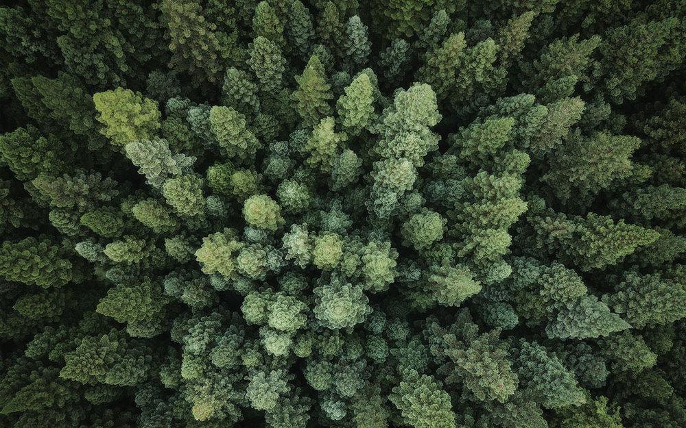 East-Warburton-California-Redwoods-Drone-Wallpaper.jpg