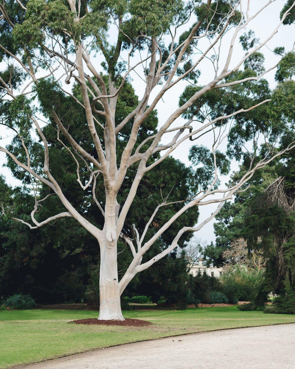 Werribee-Mansion-Park-Gardens-1.jpg