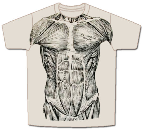 skeletees-skeletees- anatomical t-shirts designed and illustrated, Muscles