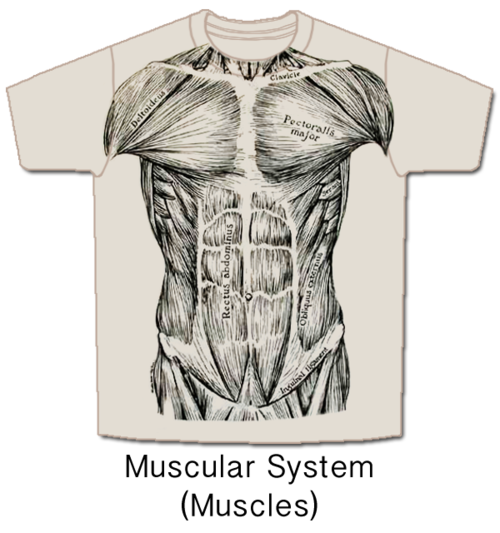 Anatomical T Shirt Skeletees