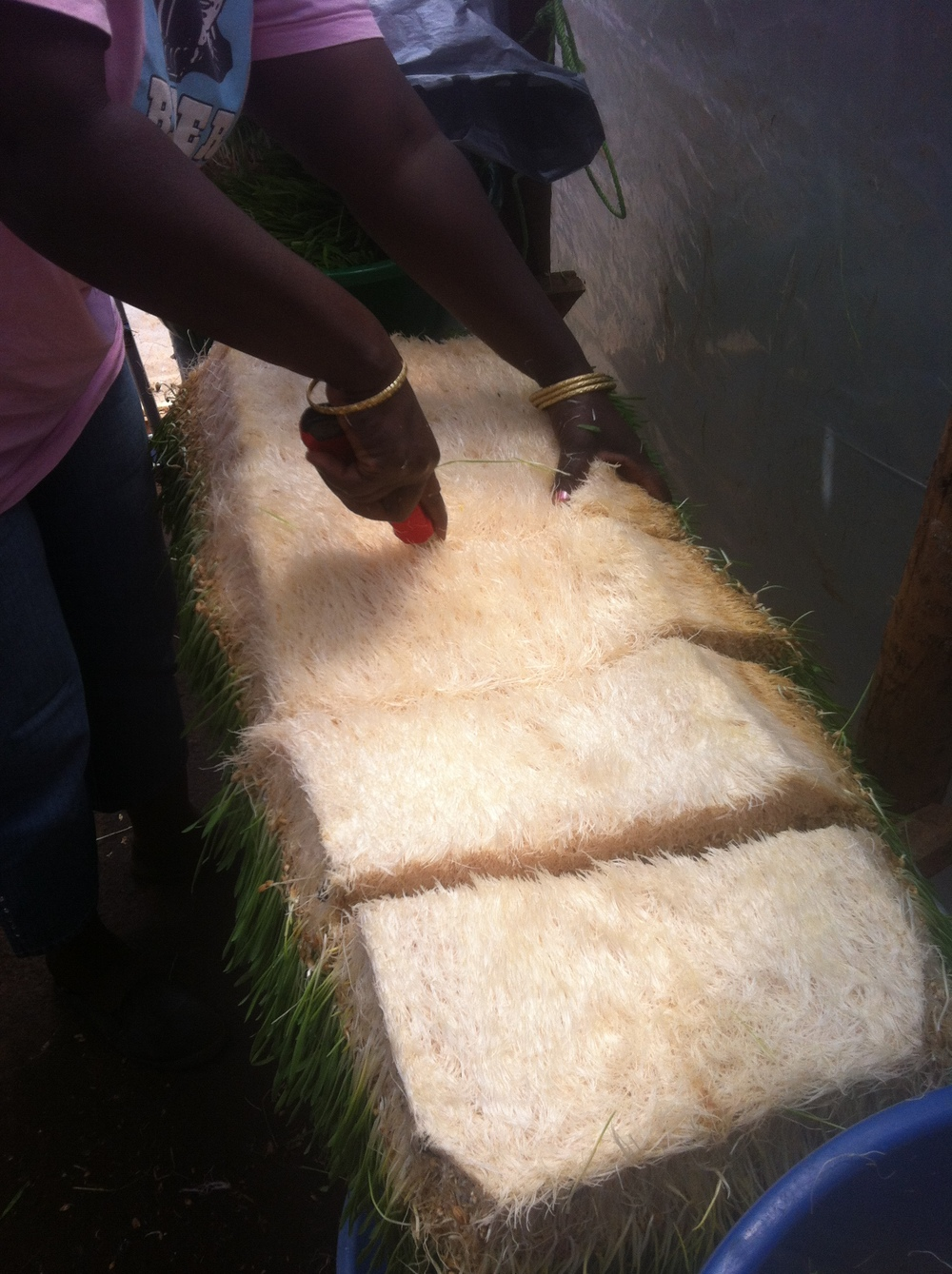 Cutting a fodder mat into small pieces to take as samples to potential customers.