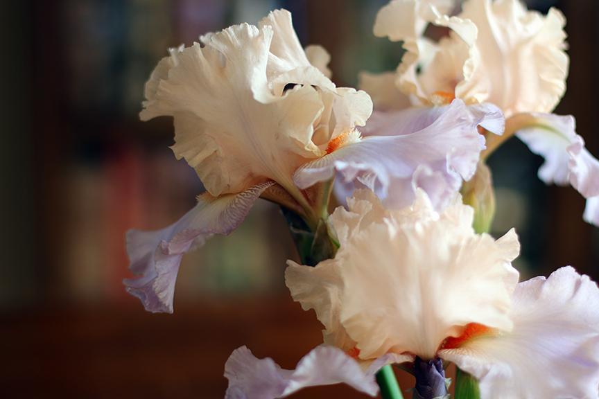 Irises02.jpg