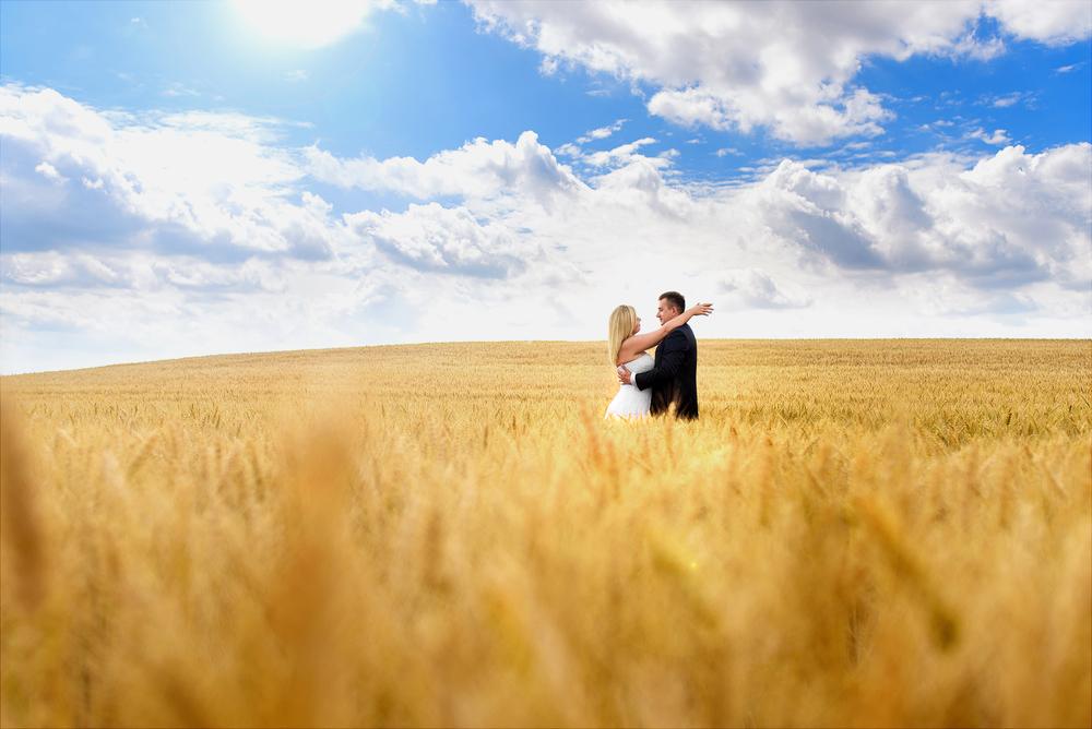 Plener ślubny na polu pszenicy
