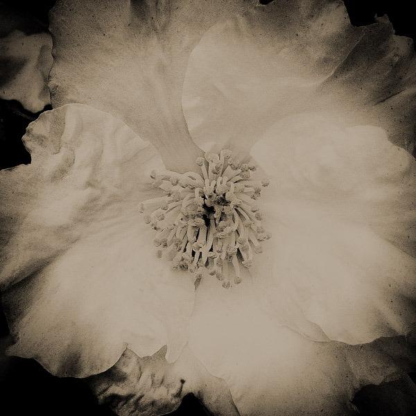 show11flower1708s.jpg