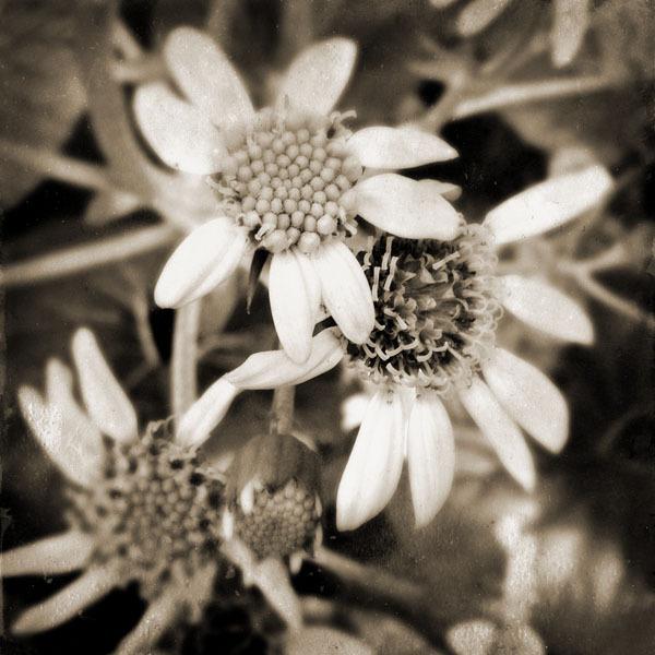 rh13_em-flower_0124_9x9_s.jpg