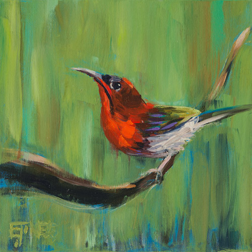 Evan Jones   Crimson Sunbird  acrylic on canvas 12 x 12 inches (SOLD)