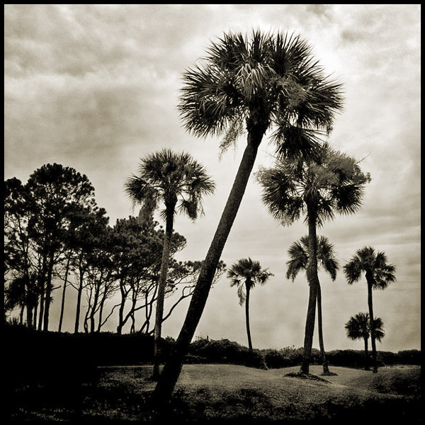 Sea Pines | Atlantic Dunes