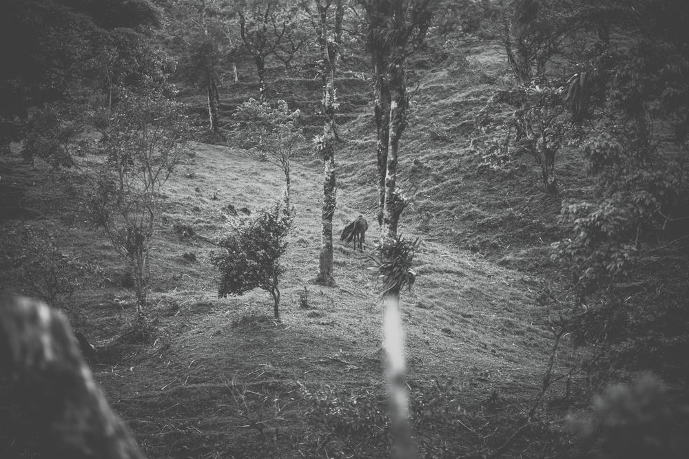 Jeremie Barlow Photography -4408.jpg