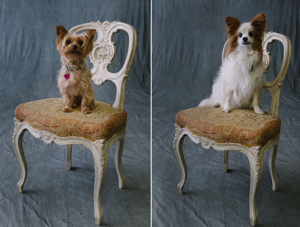 set pets dogs louis lavender french antiques