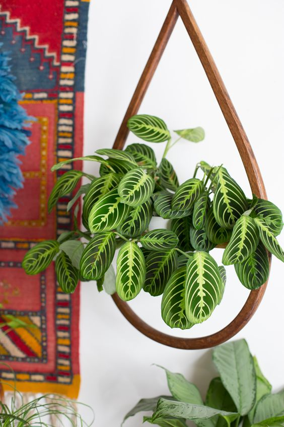 2018 trends in home decor: patterned plants