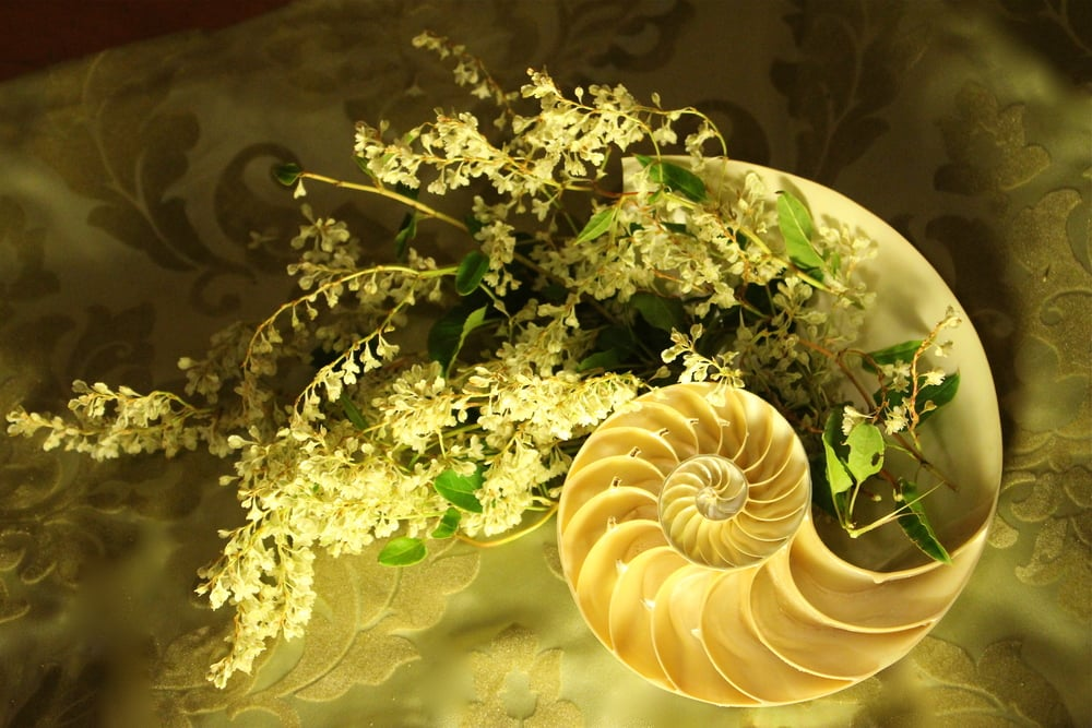 """Wave on the Golden Ratio"" by Pebble and Branch Floral Design"