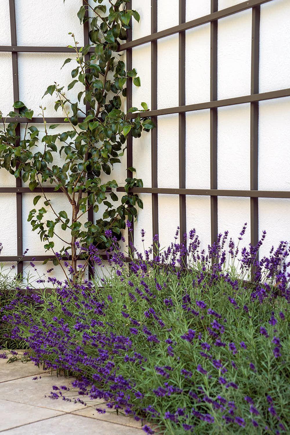 Epp-Gartenbau-Pflanzen-Pflege-79.jpg