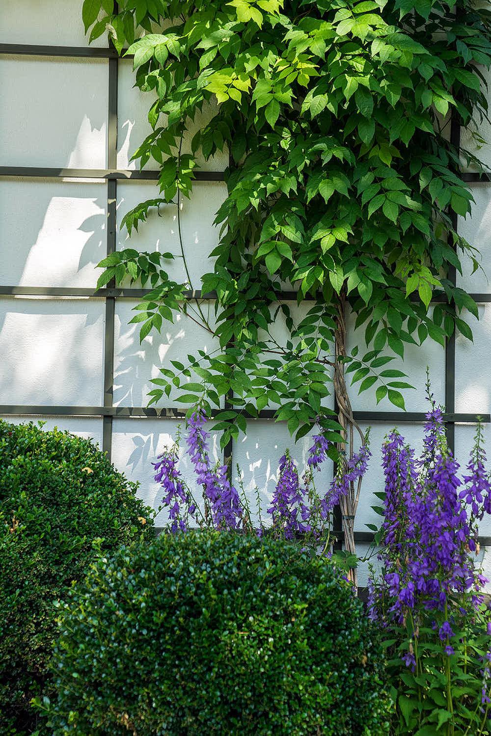 Epp-Gartenbau-Pflanzen-Pflege-80.jpg