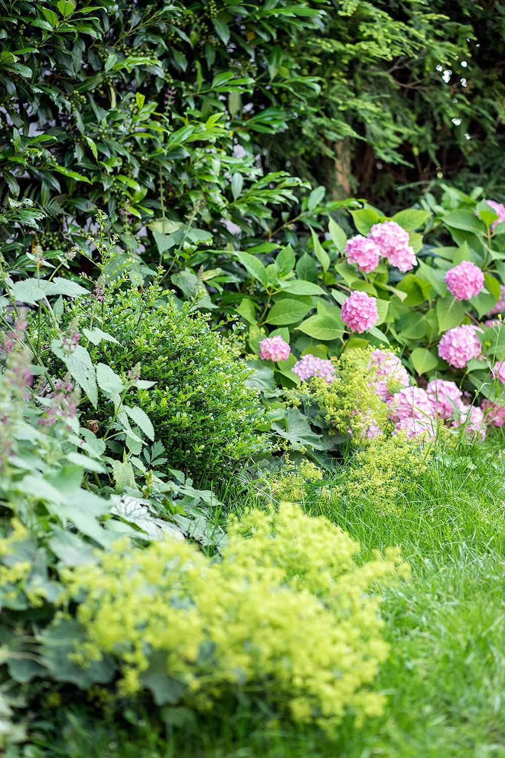 Epp-Gartenbau-Pflanzen-Pflege-82.jpg