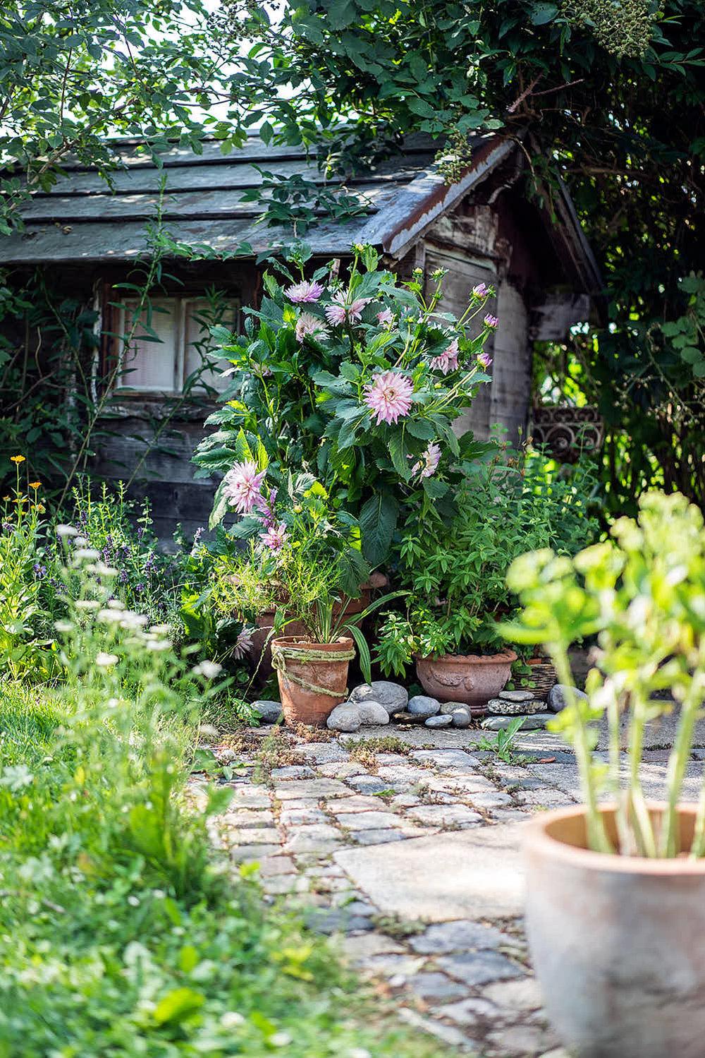 Epp-Gartenbau-Pflanzen-Pflege-83.jpg