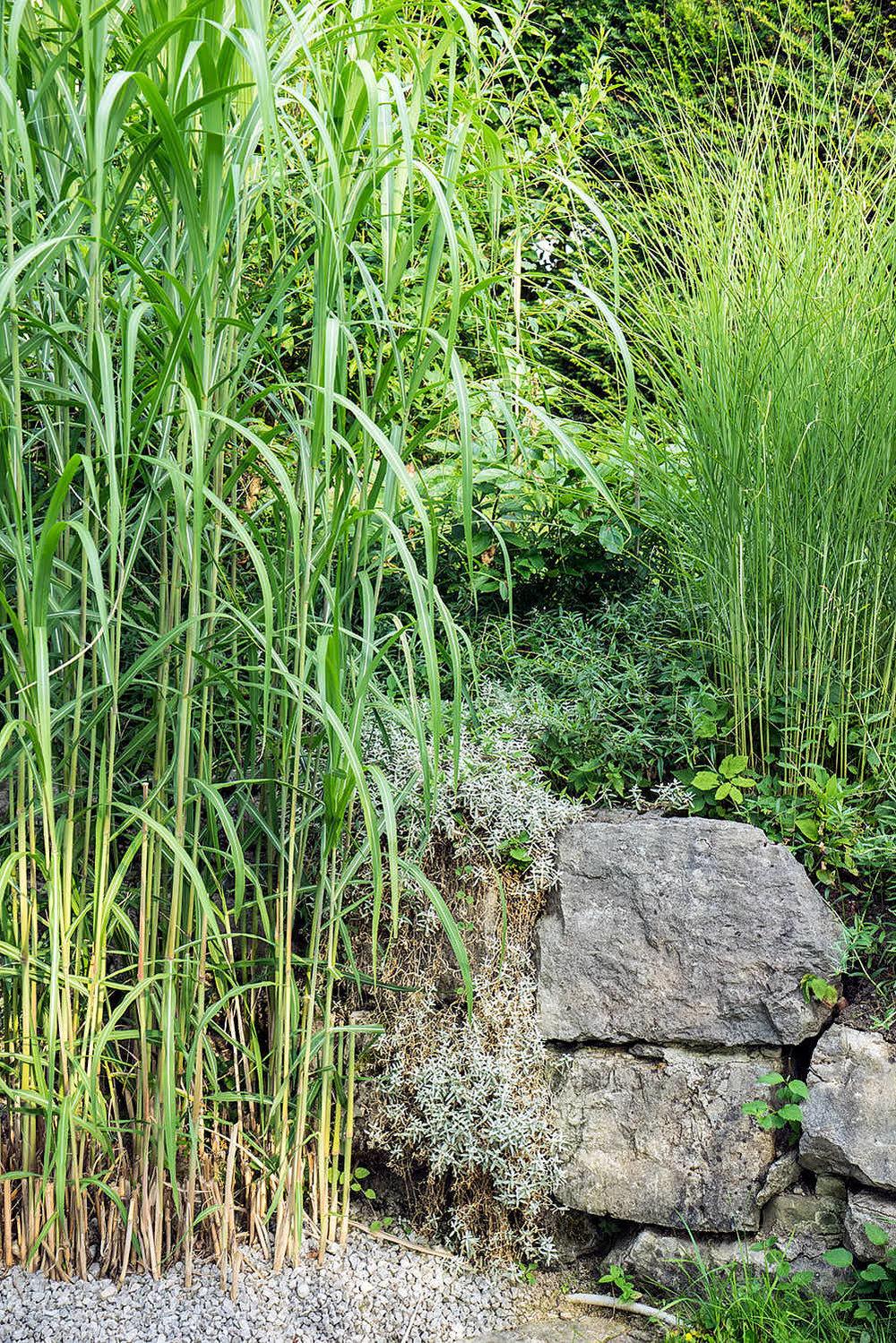 Epp-Gartenbau-Pflanzen-Pflege-87.jpg