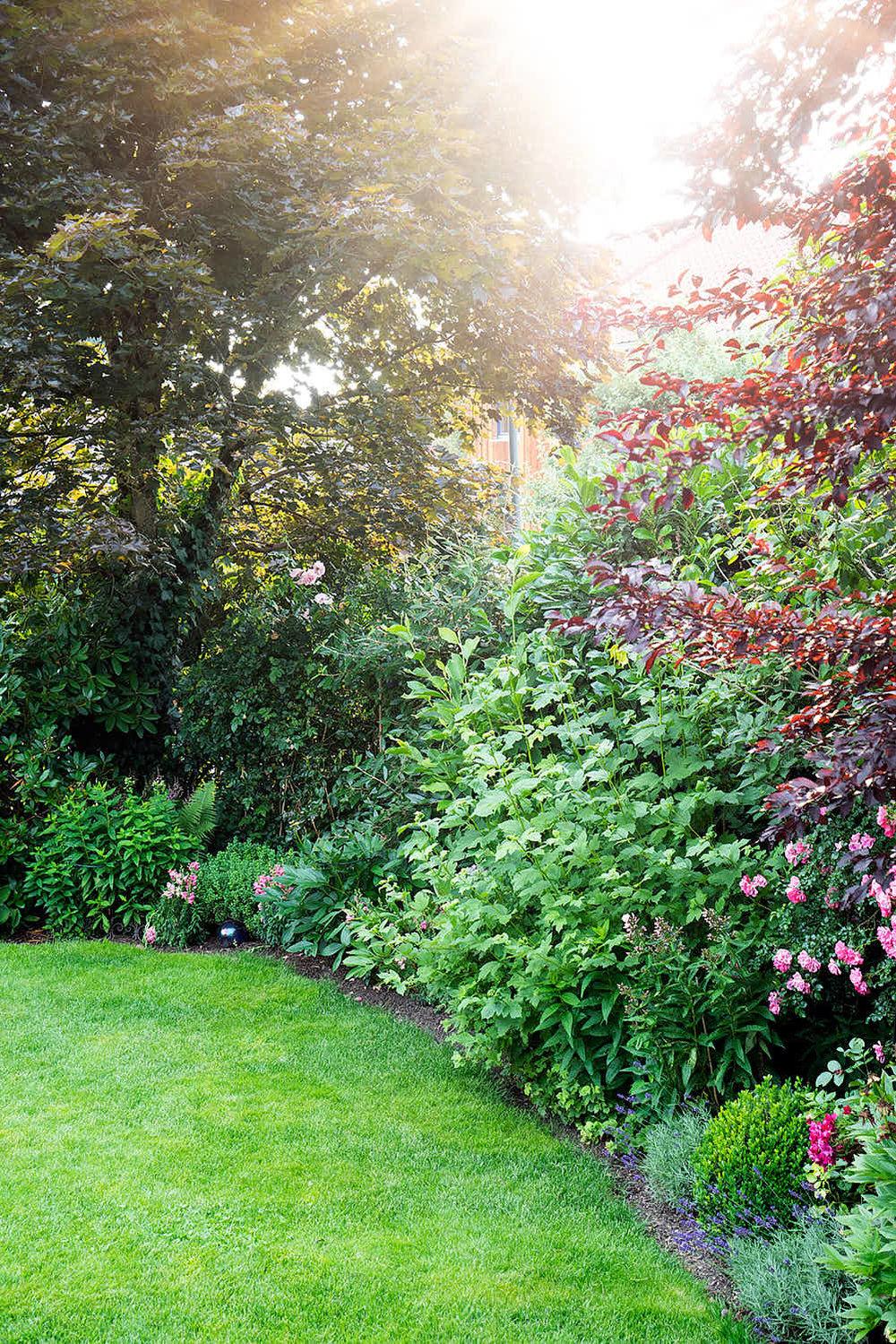 Epp-Gartenbau-Pflanzen-Pflege-89.jpg
