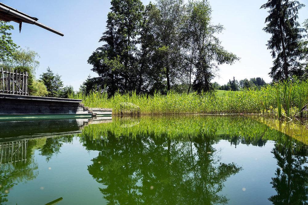 Epp-Gartenbau-Teich-3-181.jpg