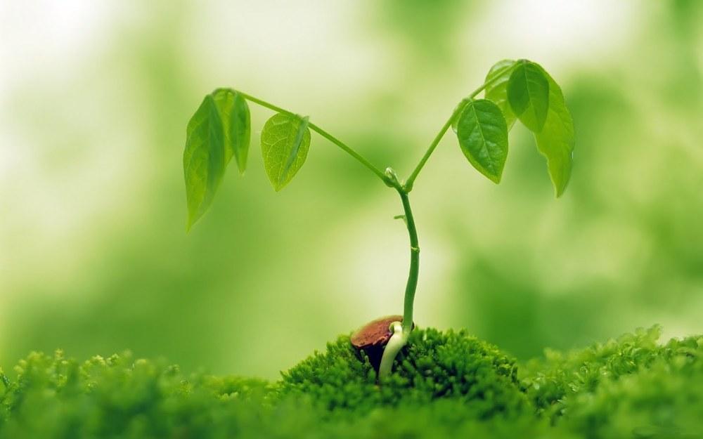 Macro-Plant-Tree-High-Resolution-Stock-Images-20.jpg