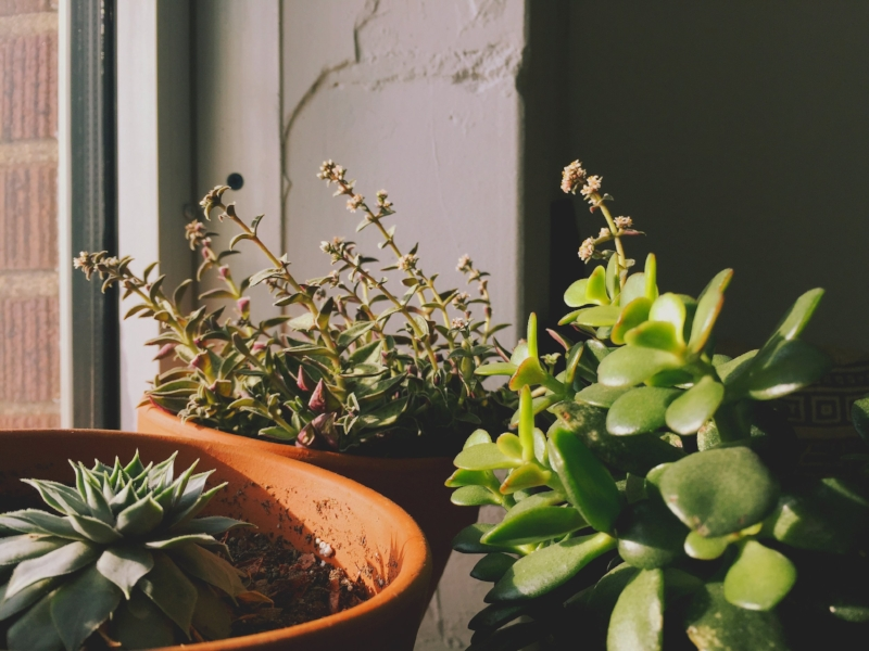 I relate to these plants trying to grow toward the light!