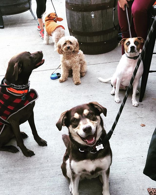 Team bonding is even better when our fur babies get to join! @savetheanimalsfoundation #yappyhour #keepingupwithaquarius #teambonding #happyhour #dogfamily #welovedogs #patiolife #woodburnbrewery #workhardplayhard