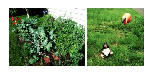organic home garden, garden, outdoor garden