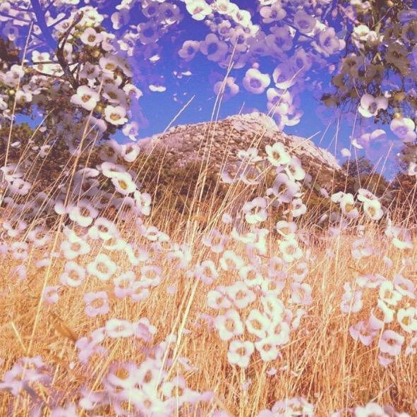 Mountagne de Fleurs.jpg