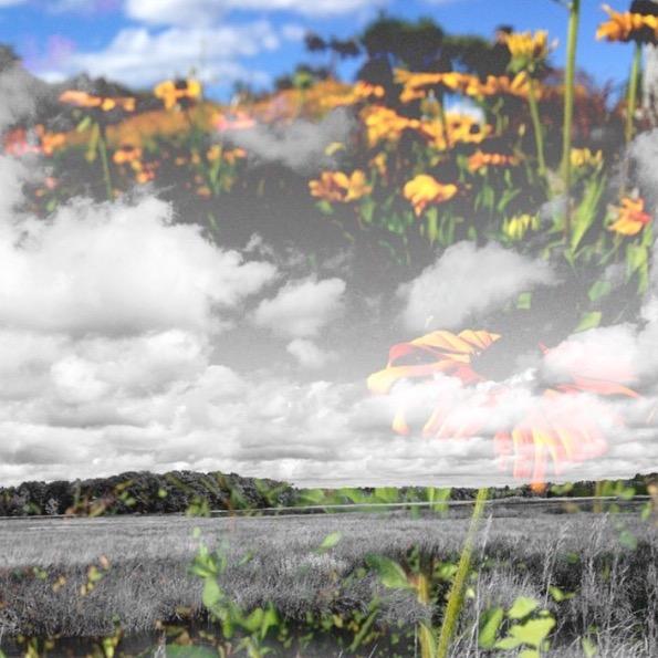 Ciel de Fleurs.jpg