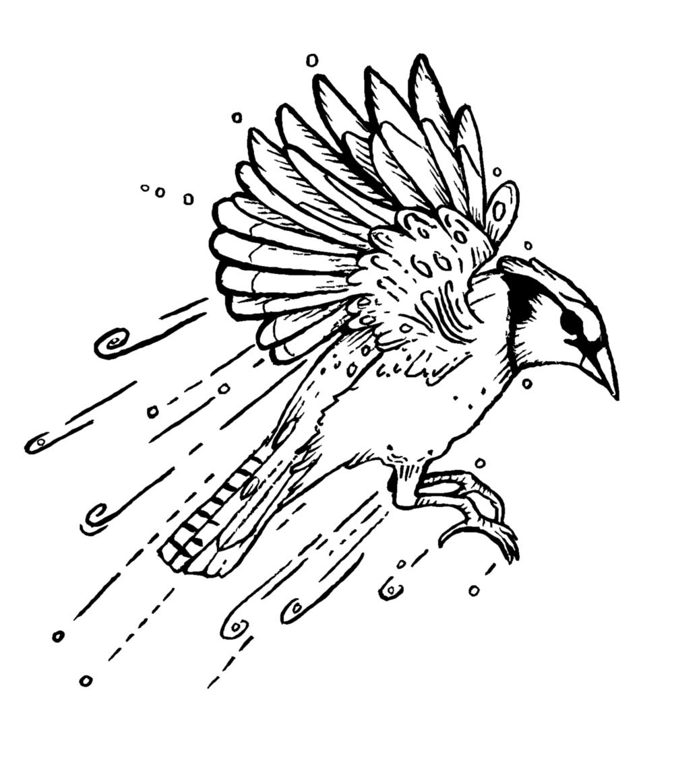 Fruv Jays - Detail