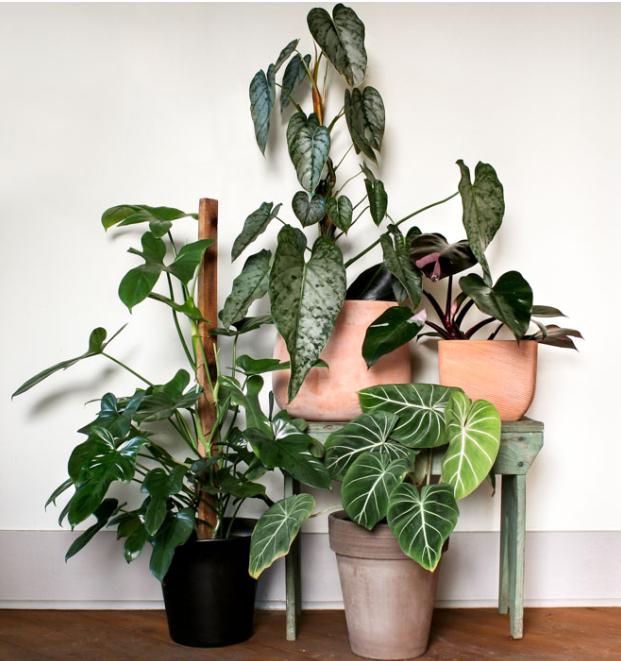 indoor plants.png