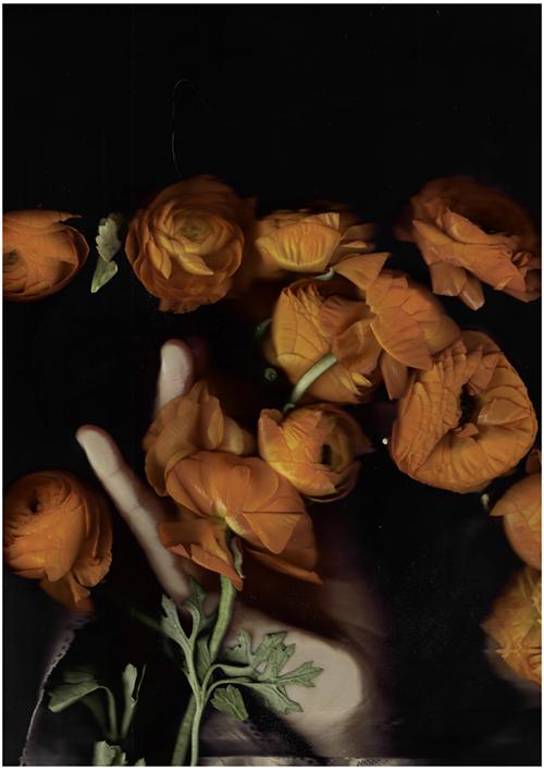 "Image Credit: Paloma Mayorga, Poderosa II, 2016. Ranunculus, Digital C-type print, 45"" x 30"""