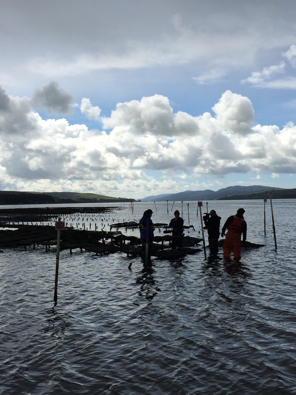 Out on the water in Tomales Bay, with partners from Hog Island Oyster Co.